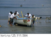 Купить «Men pushing a local fishing boat up the beach with dogs and pelicans behind them, Mexico.», фото № 25111584, снято 19 октября 2019 г. (c) Nature Picture Library / Фотобанк Лори