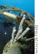 Купить «Bi tube sponges (Haplosclerida sp) in front of the crane on the Ka Hing wreck, Kudat Peninsula, Sabah, Borneo Model released.», фото № 25119032, снято 16 января 2019 г. (c) Nature Picture Library / Фотобанк Лори