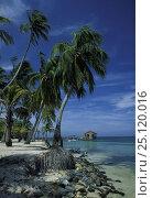 Купить «Half Moon bay, Roatan, Honduras.», фото № 25120016, снято 20 января 2019 г. (c) Nature Picture Library / Фотобанк Лори