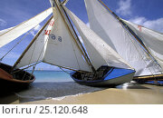 Купить «Traditional workboats on the beach during Grenada Sailing Festival, Caribbean.», фото № 25120648, снято 9 декабря 2019 г. (c) Nature Picture Library / Фотобанк Лори