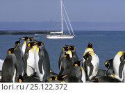 "Купить «King penguins (Aptenodytes patagonicus) with yacht ""Kotick"" behind, St Andrews Bay, South Georgia.», фото № 25122372, снято 24 сентября 2018 г. (c) Nature Picture Library / Фотобанк Лори"