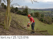 Купить «Green Mantle Ltd. contractor using a chainsaw to clear encroaching trees from a grassland hillside to improve habitat for bees and other pollinators for...», фото № 25123016, снято 24 сентября 2018 г. (c) Nature Picture Library / Фотобанк Лори