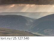 Купить «Shafts of light over Glenfeshie, Cairngorms National Park, Scotland, UK, September 2013.», фото № 25127540, снято 28 мая 2018 г. (c) Nature Picture Library / Фотобанк Лори