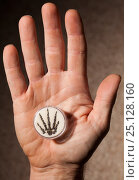 Купить «Fossilized hand of small predatory Permian reptile (Captorhinus), held in human hand. Humans share five fingered (pentadactyl) hands with many ancestors...», фото № 25128160, снято 15 декабря 2017 г. (c) Nature Picture Library / Фотобанк Лори