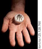 Купить «Fossilized hand of small predatory Permian reptile (Captorhinus), held in human hand. Five fingered pentadactyl hand we share with ancestors going back...», фото № 25128760, снято 15 декабря 2017 г. (c) Nature Picture Library / Фотобанк Лори