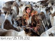 Купить «Ekaterina Yaptik, a Nenet herder selecting draught Reindeer (Rangifer tarandus) from corral. Yar-Sale district, Yamal, Northwest Siberia, Russia. April 2016.», фото № 25135232, снято 19 июля 2019 г. (c) Nature Picture Library / Фотобанк Лори