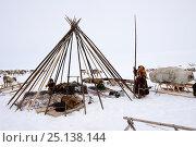 Купить «Nenet herders erecting tent on tundra. Yar-Sale district, Yamal, Northwest Siberia, Russia. April 2016.», фото № 25138144, снято 19 июля 2019 г. (c) Nature Picture Library / Фотобанк Лори
