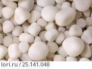 Купить «Cave Pearls, formed as dripping water rich in calcium salts deposits calcite around a small nucleus (often a sand grain). The constant movement of each...», фото № 25141048, снято 16 октября 2018 г. (c) Nature Picture Library / Фотобанк Лори