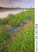 Купить «Mexican hat (Ratibida columnifera) flowers along lakeside path, Laredo Borderlands, Texas, USA. April», фото № 25143704, снято 7 июля 2020 г. (c) Nature Picture Library / Фотобанк Лори