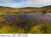 Купить «Heathland pool surrounded by sphagnum moss. Godlingston Heath National Nature Reserve, Dorset, UK. August 2015.», фото № 25147220, снято 2 июня 2020 г. (c) Nature Picture Library / Фотобанк Лори
