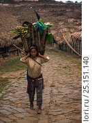 Купить «Chang Naga woman carrying firewood,  Tuensang district. Nagaland, North East India, October 2014.», фото № 25151140, снято 21 августа 2018 г. (c) Nature Picture Library / Фотобанк Лори