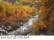 Купить «River in the Verdon Gorge / Gorges du Verdon, Verdon Natural Regional Park, Alpes de Haute Provence,  Provence, France, October 2007.», фото № 25155424, снято 16 июля 2018 г. (c) Nature Picture Library / Фотобанк Лори