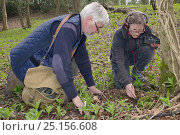 Купить «Roger Trout and Dani Rozycka using a radiotracking cable to locate a radio-collared Edible / Fat Dormouse (Glis glis) hibernating in its underground burrow...», фото № 25156608, снято 19 августа 2018 г. (c) Nature Picture Library / Фотобанк Лори