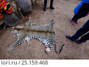 Купить «Leopard skin (Panthera pardus) for use in ceremonies and celebrations. Dorze village. Ethiopia, November 2014», фото № 25159468, снято 22 апреля 2019 г. (c) Nature Picture Library / Фотобанк Лори