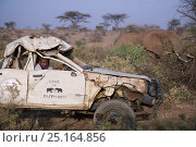 Купить «Daniel Lentipo driving the former research vehicle destroyed by bull elephant in Samburu National Reserve, Kenya. August 2009. Model Released.», фото № 25164856, снято 16 июля 2018 г. (c) Nature Picture Library / Фотобанк Лори