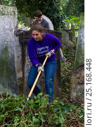 Купить «Friends of Tower Hamlets Cemetery Community Conservation volunteers carrying out conservation work to clear ivy from graveyard, and planting flowers as...», фото № 25168448, снято 20 августа 2018 г. (c) Nature Picture Library / Фотобанк Лори