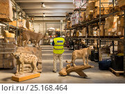 Купить «Man with taxidermy specimens confiscated by the Spanish police at Adolfo Suarez Madrid-Barajas Airport in accordance with CITES, stored in a government warehouse, Spain, October 2014.», фото № 25168464, снято 22 мая 2018 г. (c) Nature Picture Library / Фотобанк Лори