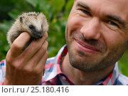 Купить «European hedgehog (Erinaceus europaeus) hand reared orphan held by man, Jarfalla, Sweden.», фото № 25180416, снято 20 января 2019 г. (c) Nature Picture Library / Фотобанк Лори