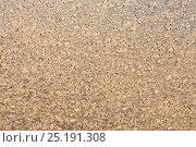 Купить «Migratory Locust (Locusta migratoria capito) swarm flying, near Isalo National Park, Madagascar. August 2013.», фото № 25191308, снято 15 декабря 2017 г. (c) Nature Picture Library / Фотобанк Лори