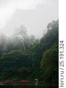 Купить «Sri Lankan rain forest in mist, Sri Lanka, March 2005.», фото № 25191324, снято 19 августа 2018 г. (c) Nature Picture Library / Фотобанк Лори
