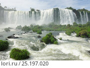Купить «Iguassu Falls at Iguacu National Park, Foz do Iguacu, Parana State, Southern Brazil, April 2013.», фото № 25197020, снято 3 июня 2018 г. (c) Nature Picture Library / Фотобанк Лори
