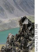 Купить «Plain Mountain finch (Leucosticte nemoricola) juvenile on rocks, Altai Mountains, Chuysky Range, Siberia, Russia, August.», фото № 25197948, снято 19 июля 2019 г. (c) Nature Picture Library / Фотобанк Лори
