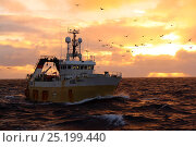 Купить «Hull registered trawler 'Farnella' fishing for Saithe on the North Sea, November 2013. All non-editorial uses must be cleared individually.», фото № 25199440, снято 16 октября 2018 г. (c) Nature Picture Library / Фотобанк Лори