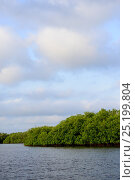 Mangrove swamp on coast of Orango Island, Guinea-Bissau, December 2013. Стоковое фото, фотограф Enrique Lopez-Tapia / Nature Picture Library / Фотобанк Лори