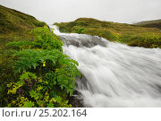 Small cascading waterfall, Hornstrandir, Westfjords, Iceland, July 2012. Стоковое фото, фотограф Terry Whittaker / Nature Picture Library / Фотобанк Лори