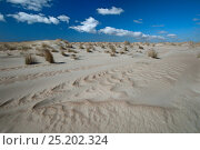 Купить «Wind / sand structures in young dunes, De Hors, Texel, the Netherlands, April 2013.», фото № 25202324, снято 16 августа 2018 г. (c) Nature Picture Library / Фотобанк Лори