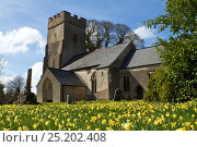 Купить «Clatworthy Church surrounded by daffodils,, Somerset, UK, April 2004.», фото № 25202408, снято 16 июля 2018 г. (c) Nature Picture Library / Фотобанк Лори