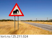 Купить «Road sign warning of wild elephants, Namibia, September 2013.», фото № 25211024, снято 22 августа 2018 г. (c) Nature Picture Library / Фотобанк Лори