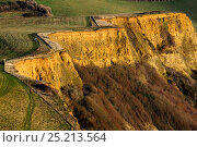 Купить «Coast path between Thorncombe Beason and Eype Mouth showing Thorncombe Sands in the cliff face, Dorset, UK.», фото № 25213564, снято 21 июня 2019 г. (c) Nature Picture Library / Фотобанк Лори