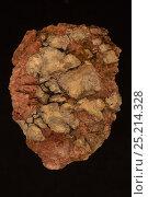 Купить «Fluocerite ((Ce,La)F3) from Black Cloud Pegmatite, Divide, Teller County, Colorado, USA.», фото № 25214328, снято 19 августа 2018 г. (c) Nature Picture Library / Фотобанк Лори
