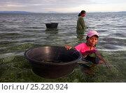 Купить «Women gathering mollusc eggs for sale at market, Bilang Bilangang Island, Danajon Bank, Central Visayas, Philippines, April 2013», фото № 25220924, снято 10 июля 2020 г. (c) Nature Picture Library / Фотобанк Лори