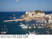 Купить «View of Ponza's harbour, Ponza Island, Italy, Tyrrhenian Sea, Mediterranean, July 2008», фото № 25225124, снято 1 августа 2019 г. (c) Nature Picture Library / Фотобанк Лори