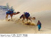 Купить «Camel herder leading Dromedary camels (Camelus dromedarius), Thar Desert, Rajasthan, India», фото № 25227708, снято 25 мая 2019 г. (c) Nature Picture Library / Фотобанк Лори