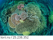 Acropora table and staghorn coral reef, Great Barrier Reef, Australia. Стоковое фото, фотограф Jurgen Freund / Nature Picture Library / Фотобанк Лори