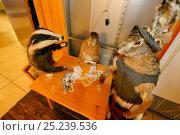 Купить «Stuffed local wildlife including Badger and Hare  in tourist hotel, Velebit Nature Park, Rewilding Europe area, Velebit mountains, Croatia», фото № 25239536, снято 17 февраля 2020 г. (c) Nature Picture Library / Фотобанк Лори