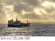 Купить «Fraserburgh pelagic trawler 'Forever Grateful' fishing for Atlantic mackerel (Scomber scombrus) close to Papa Stour, Shetland Isles, Scotland, UK, October 2012.», фото № 25240180, снято 22 мая 2018 г. (c) Nature Picture Library / Фотобанк Лори