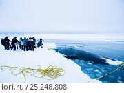 Купить «Inupiaq subsistence whalers prepare to pull up a bowhead whale (Balaena mysticetus) catch along the edge of the open lead in the pack ice. Chukchi Sea...», фото № 25248808, снято 21 января 2018 г. (c) Nature Picture Library / Фотобанк Лори
