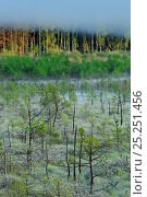 Купить «Mist over wetland area, with sparse trees next to woodland, Serrahnbruch, Muritz National Park, Germany, May», фото № 25251456, снято 16 августа 2018 г. (c) Nature Picture Library / Фотобанк Лори