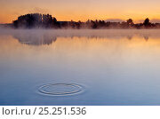 Купить «Concentric ripples in lake surface, at dawn  Haussee Feldberg, Naturpark Feldberger Seenlandschaft nature reserve, Germany. October 2007», фото № 25251536, снято 22 января 2018 г. (c) Nature Picture Library / Фотобанк Лори