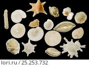 Купить «A variety of foraminiferes from a sand sample collected in Raja Ampat, Indonesia. The shells come from pelagic as well as bottom dwelling species that...», фото № 25253732, снято 14 февраля 2020 г. (c) Nature Picture Library / Фотобанк Лори