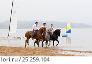 Купить «Lusitano horse, men and woman riding stallions beside water, practising dressage steps, Portugal, May 2011, model released», фото № 25259104, снято 19 февраля 2018 г. (c) Nature Picture Library / Фотобанк Лори