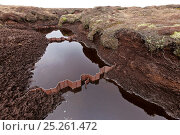 Купить «Plastic gully blocking structures used to help prevent erosion in peat moorland drainage channels, Kinder Scout NNR, Derbyshire, England, UK, July. 2020VISION Book Plate.», фото № 25261472, снято 23 апреля 2018 г. (c) Nature Picture Library / Фотобанк Лори