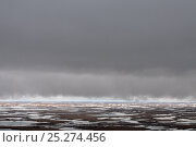 Купить «Storm clouds above partially frozen tundra, Taimyr Peninsula, Siberia, Russia, June 2010», фото № 25274456, снято 14 ноября 2019 г. (c) Nature Picture Library / Фотобанк Лори