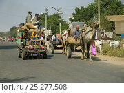Купить «Camel carts and motor transport share the road, Rajasthan, India, 2005», фото № 25277508, снято 20 января 2018 г. (c) Nature Picture Library / Фотобанк Лори