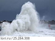 Купить «Huge wave crashing into breakwater at Lesconil, Finistere, France, December 2011.», фото № 25284308, снято 14 декабря 2017 г. (c) Nature Picture Library / Фотобанк Лори