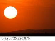 Купить «Sun rising over Masai Mara National Reserve, Kenya, August 2008», фото № 25290876, снято 21 июля 2018 г. (c) Nature Picture Library / Фотобанк Лори